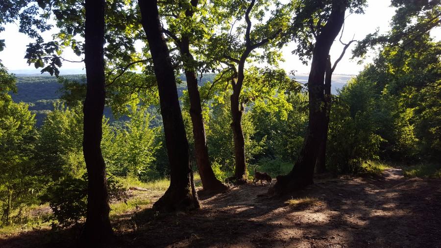 Aventuri in cinci Terapie cu soare si bicicleta