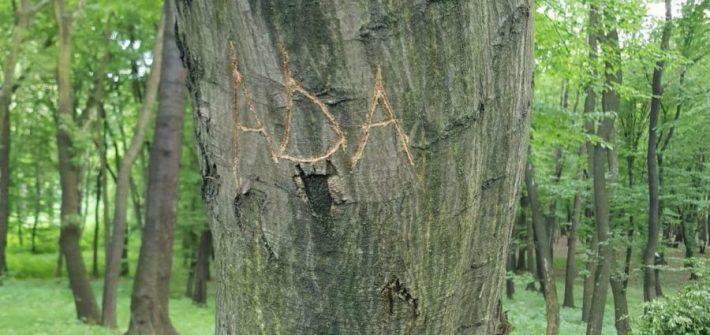 Aventuri in cinci Ada